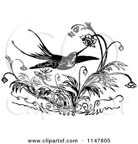 bevalet s hummingbirds and flowers a vintage grayscale coloring book vintage grayscale coloring books volume 3 books 254 best images about stencils on mermaid