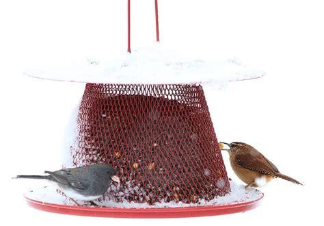 top 6 best cardinal bird feeders in 2017 to get cardinals