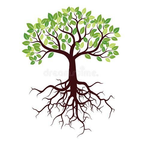 clipart albero albero con le radici e le foglie illustrazione di stock
