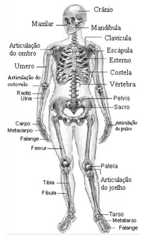Fisioramires: Sistema Esquelético e fratura óssea