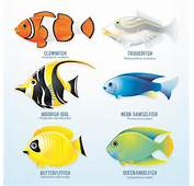 Set Of Various Fish Vector 05  Animal Free Download