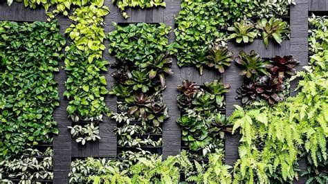 grow  vertical garden  home choice