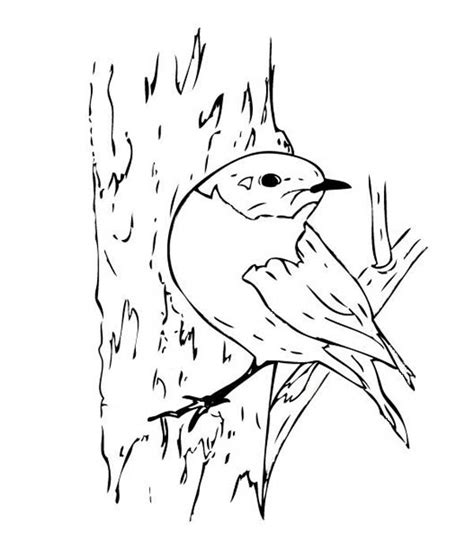 free coloring pages of bluebird