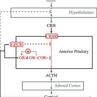 (pdf) in vitro detection of adrenocorticotropic hormone