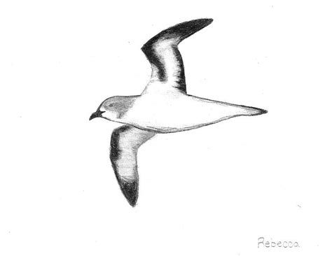 how to draw sea birds image gallery seabirds drawing