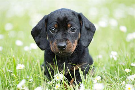 black names puppies black names 60 names for or black puppies idogfun