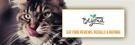 beyond food reviews small batch cat food reviews cats