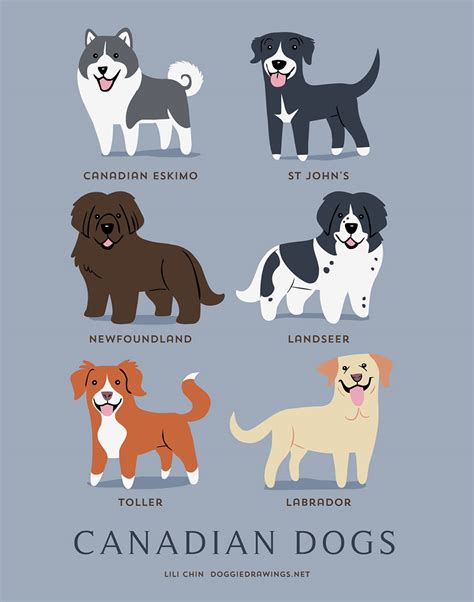 dogs poster the origins of 200 breeds explained in adorable posters