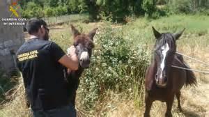 burros con yeguas roban un burro y una yegua y los ponen a la venta en internet