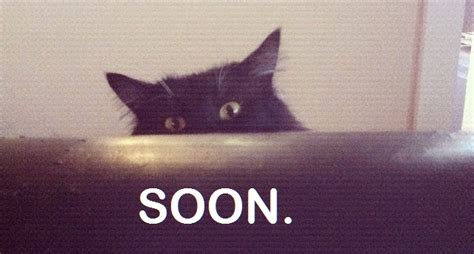 Soon Cat Meme - cat owners do you own your kitty or does your kitty own you girlsaskguys