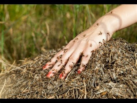 prevent insect bites doovi