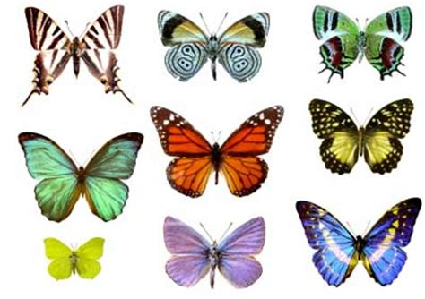 butterfly colors iridescence in butterfly wings howstuffworks