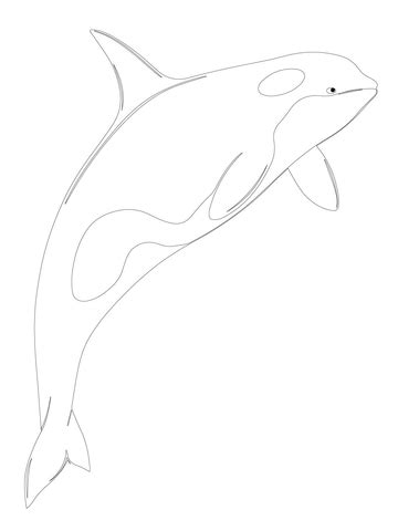 orca whale shamu coloring page supercoloring com
