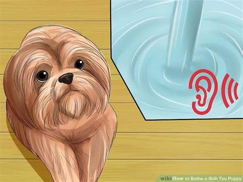 how to bathe a shih tzu puppy how to bathe a shih tzu puppy 15 steps with pictures wikihow