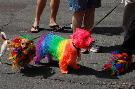 rainbow puppies rainbow puppies flickr photo
