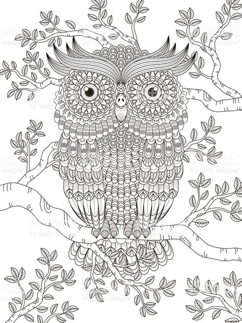 coloring pages for adults vector adult coloring page with gorgeous owl stock vector art