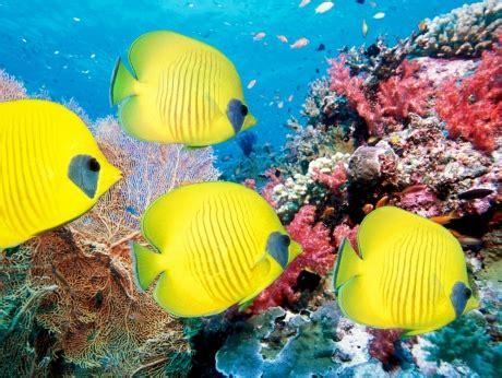 Скачать бесплатно фото подводный мир. full hd обои для