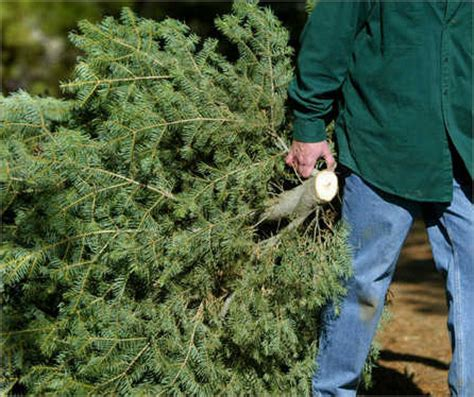 where to recycle your christmas tree north delawhere