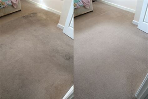 national carpet and upholstery cleaning are there many germs in carpets bonnefreshclean