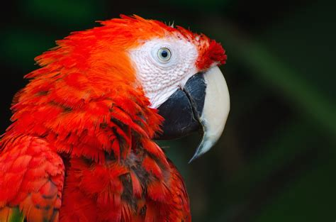 Exotic Colors by Free Picture Macaw Parrot Nature Parrot Animal Bird