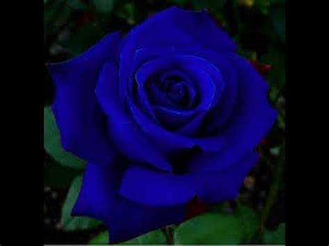 imagenes lindas raras ccb hinos cantados com imagens de flores lindas e raras