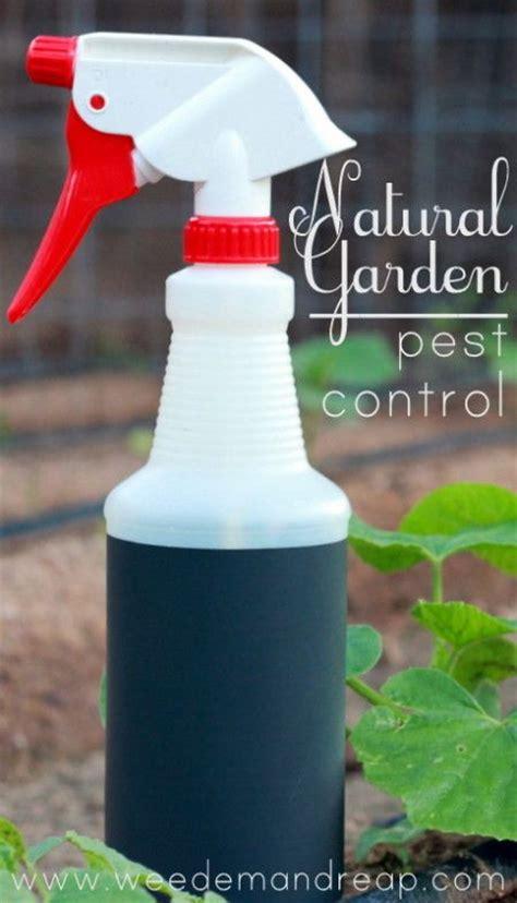 Best Insecticide For Vegetable Garden by 1777 Best Secret Garden Images On