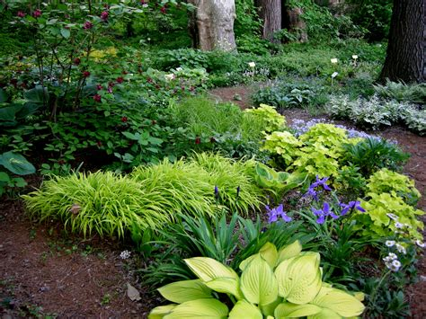 woodland garden on shade plants hosta gardens