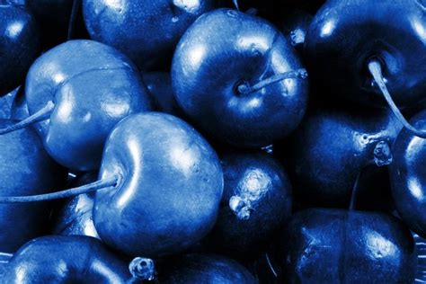 Blue Cherry free stock photos rgbstock free stock images blue