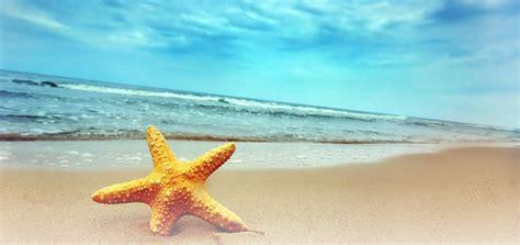 Stelan Marine Kid immagine di una stella mare su spiaggia caraibica pictures