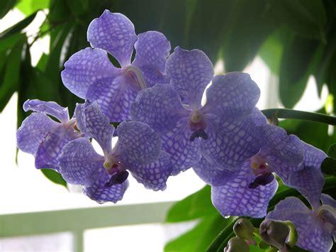 file small purple flowers jpg wikimedia commons file group purple flowers jpg wikimedia commons