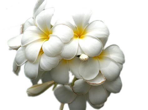 imagenes variadas de flores 174 gifs y fondos paz enla tormenta 174 im 193 genes de flores