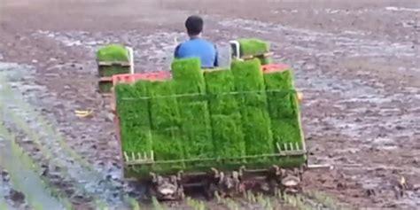Mesin Tanam Padi produksi padi di riau naik 6 43 persen
