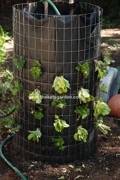 Vertical Lettuce Is A Success Good Overall Gardening Blog Best Vegetables For Vertical Gardening