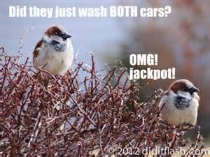 Funny Bird Memes - funny bird favouritism meme quotes