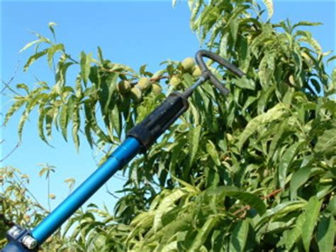 fruit tree shaker brewt power systems pneumatic pruners specialty