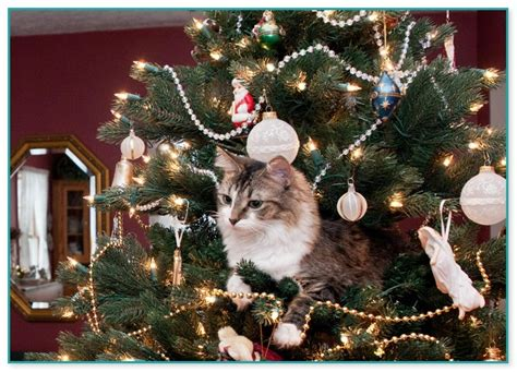 collection how to keep my cat out of the christmas tree