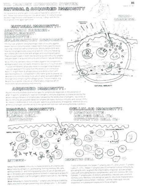 cell membrane coloring worksheet answers free worksheets library and print worksheets