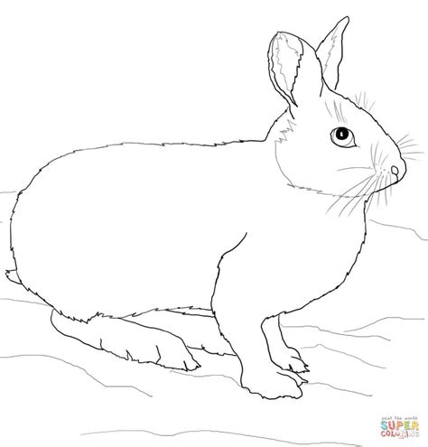 coloring pages jack rabbit 93 coloring page jack rabbit click to see printable
