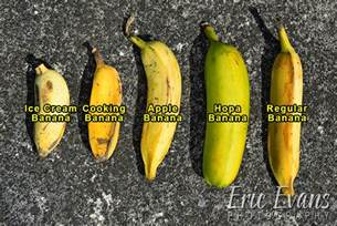 big mamas tropical fruit aloha multimedia groupaloha