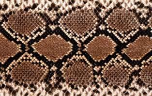 Western Fabrics Upholstery Snake Print Wallpaper Free Download Hd Widescreen
