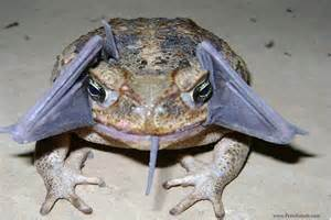 surprising photo toad eats bat national geographic society blogs