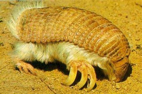 worlds strangest  animals xcitefunnet