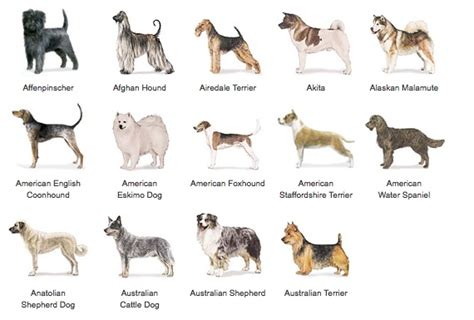 types of dogs latch methods of organization design 4