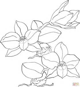 301 Moved Permanently Orchid Coloring Pages