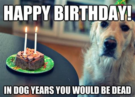 Happy Birthday Meme Dog - 34 best images about funny on pinterest valentine day cards running and silly happy birthday