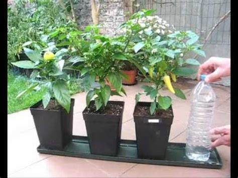 indoor plant watering system unique planters from soda bottles a diy self watering system for pot plants part1 hydroponics