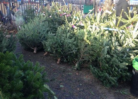 2015 costco christmas tree trailers filled with 1 000 trees stolen from a florida costco breaking911