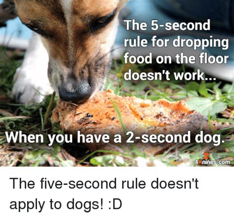 10 second rule food floor the 5 second rule for dropping food on the floor doesn t