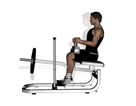 seated calf raise machine seated calf raise exercise bodybuilding wizard