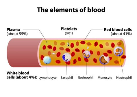 What Is It When Blood Is In Your Stool by Types Of Donations Blood Products Stanford Blood Center
